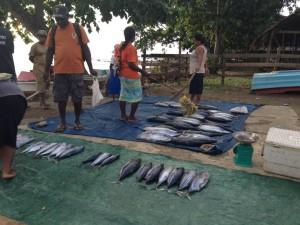 Fish Market Namuga